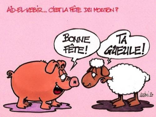 mouton2 - AÏD MABROUK 2017 - Fête du mouton - Aid Humour