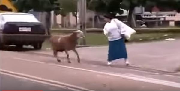 Qui veut ce mouton pour l'Aïd El Kébir - Humour