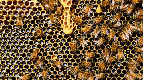 db2940a31884820c7fb90bb9deee8742 500x281 - Les cosmétiques à la cire d'abeille s'invitent dans votre quotidien