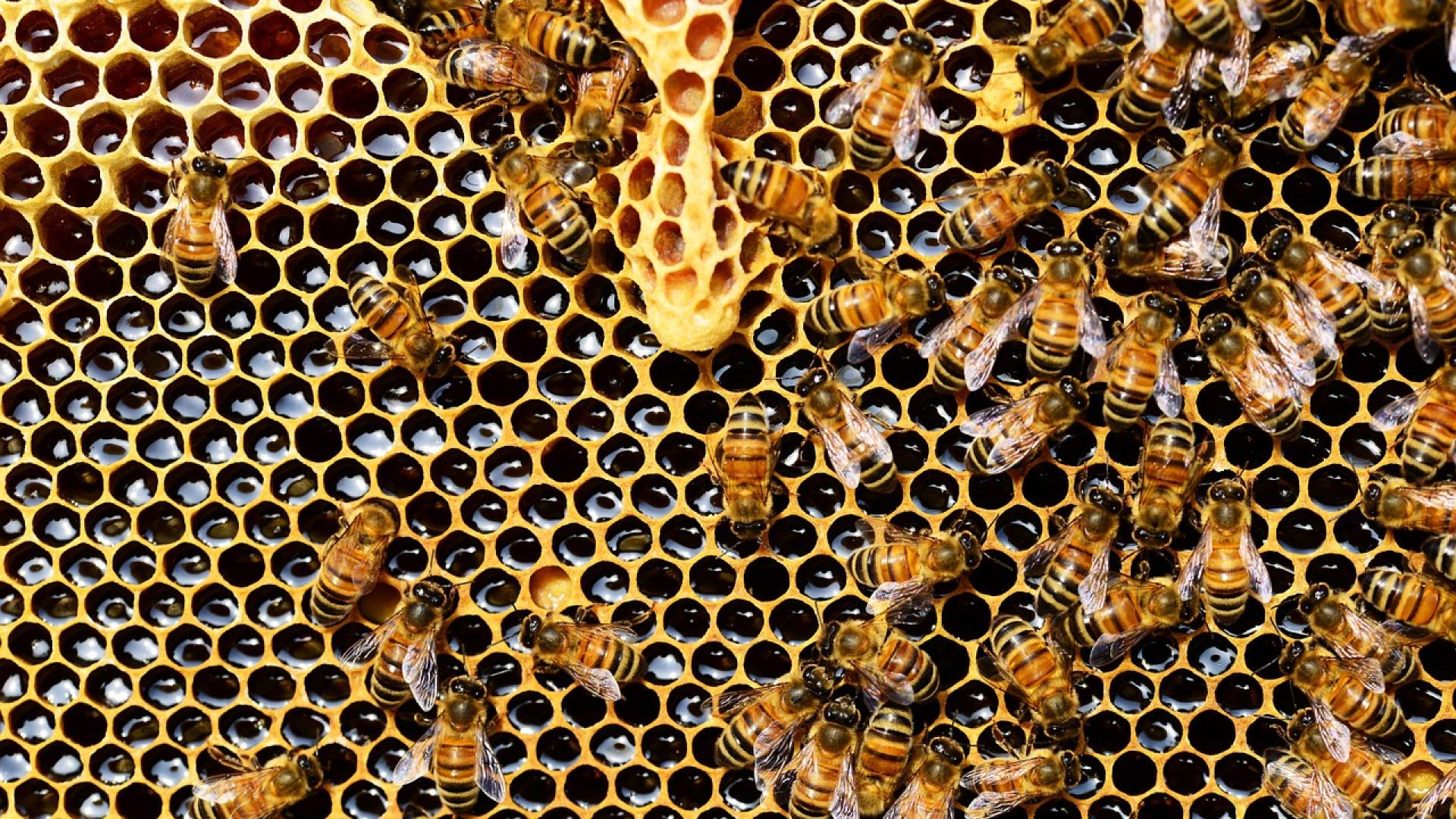 Les cosmétiques à la cire d'abeille s'invitent dans votre quotidien