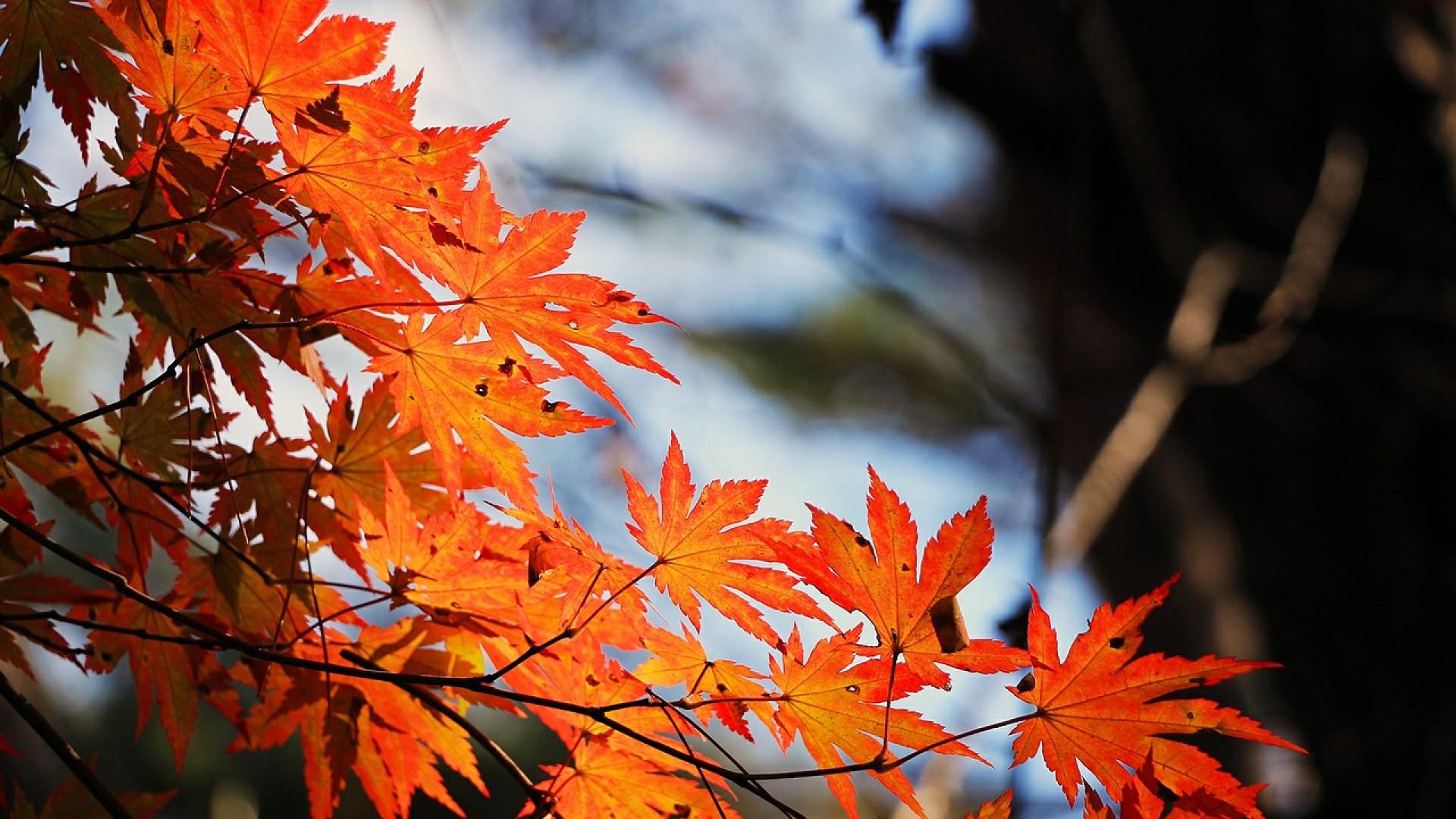 Québec : la province où même les arbres ont un coeur