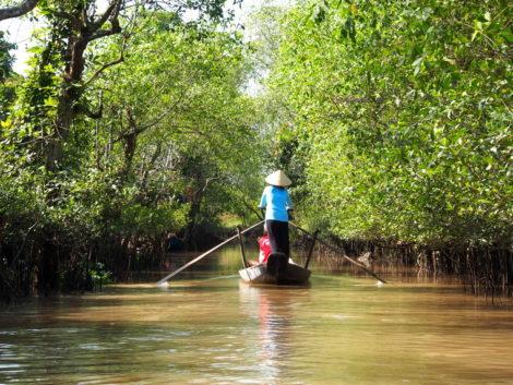 mangrove dans le delta du Mékong