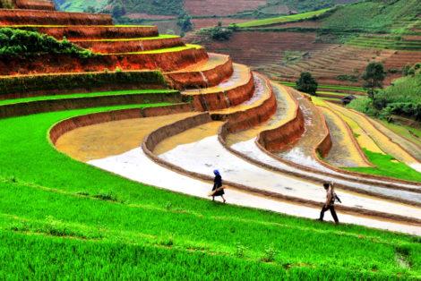 rizières en terrasse vietna