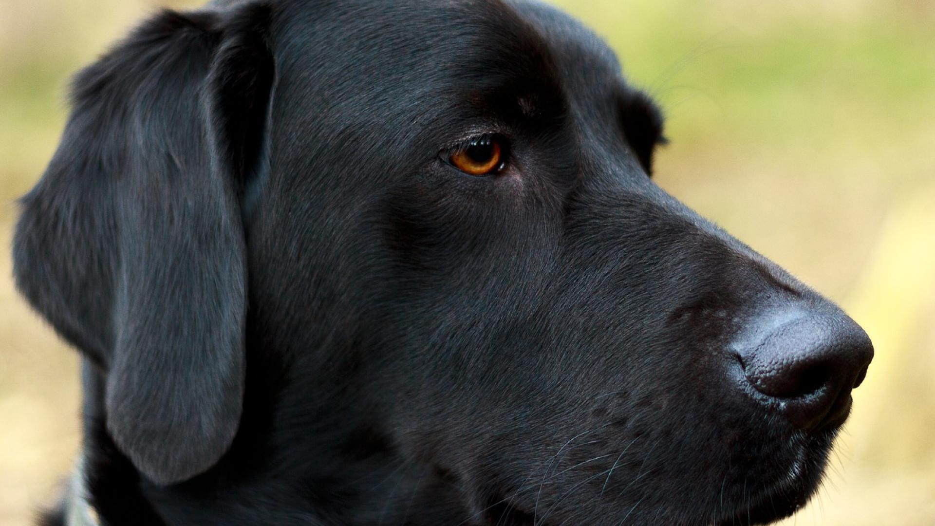 La mutuelle santé pour un chien est indispensable