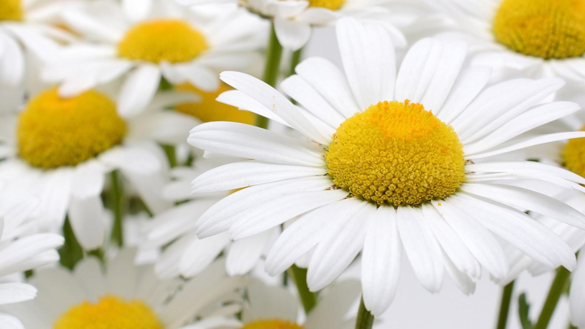 Des conseils pour choisir un bouquet de fleurs