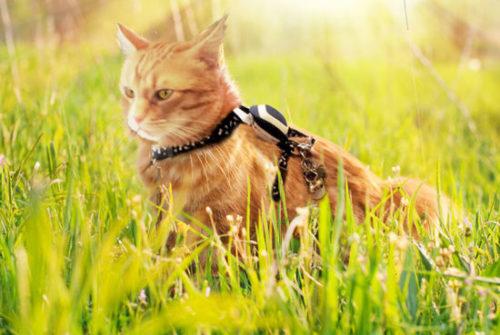 Kippy, un collier GPS pour localiser votre chat ou chien!