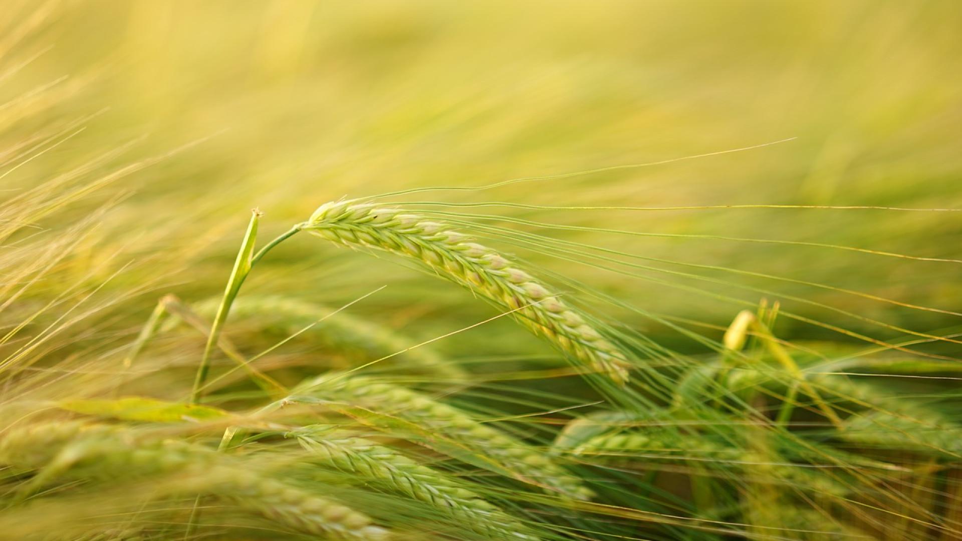 Manger bio, donner une chance à la planète tout en améliorant son bien-être