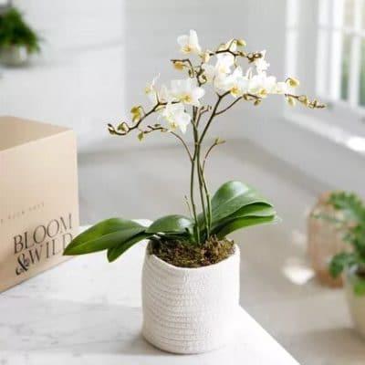 plante orchidees blanches e1585298063977 - Faites vous livrer un bouquet de fleurs à Paris!