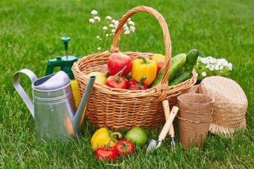 cadeaux jardinage 500x333 - 10 idées cadeaux pour les jardiniers