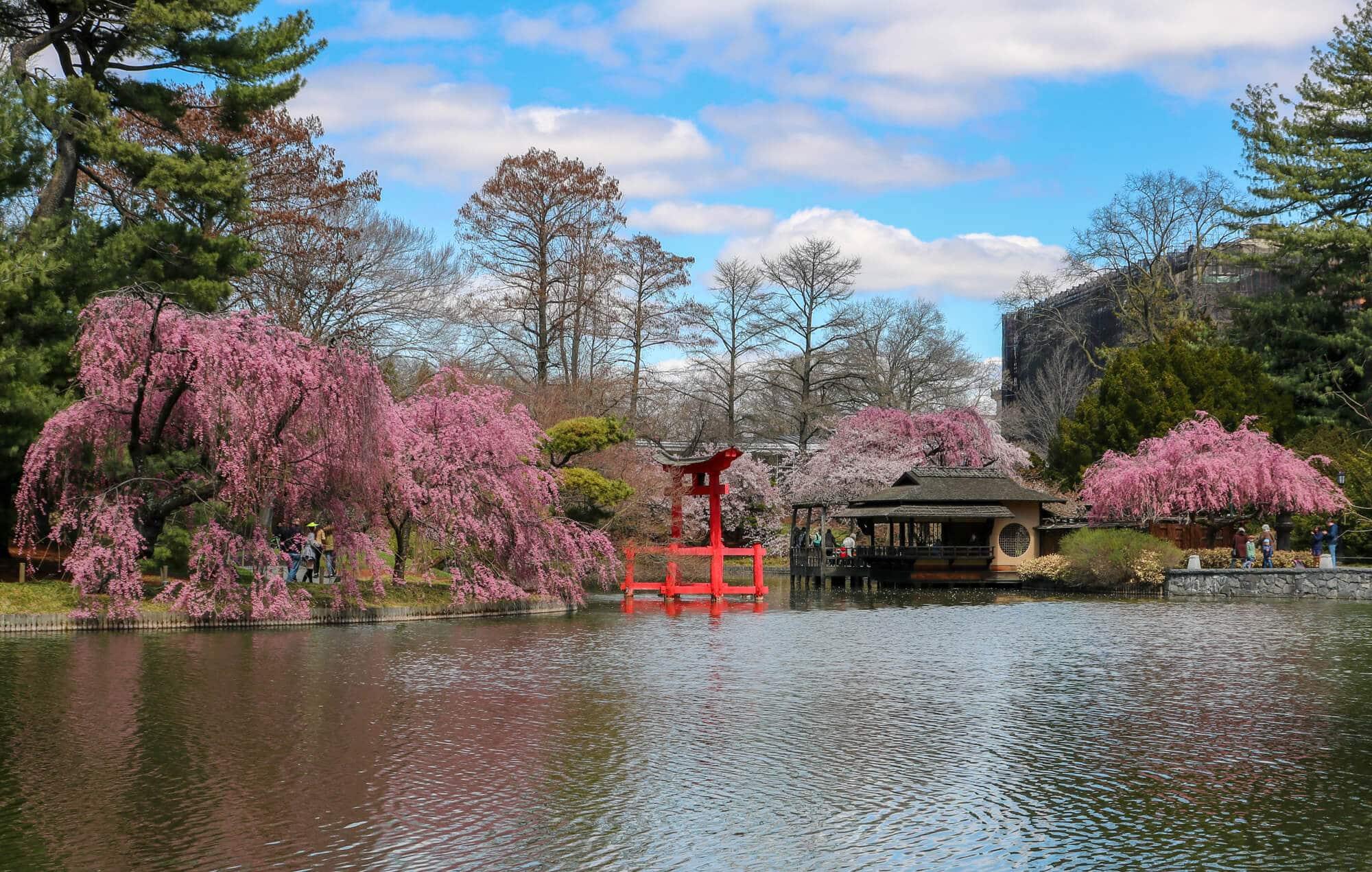 brooklyn botanic garden cherry blossoms 4 - Un voyage original entre amis : New York hors des sentiers battus