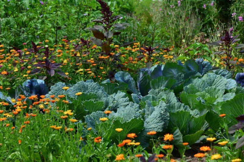 preparer jardin printemps e1613743965715 800x533 - Comment bien préparer son jardin dès le printemps ?