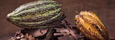 5cc4c31d8bc1dc42f6adca73ba41a1692696e631.00000118 - Pâtisserie - Boulangerie - Chocolaterie - Crottet
